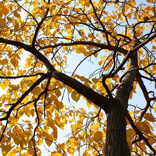 Columbia-Fall-and-Spring-Cleanup