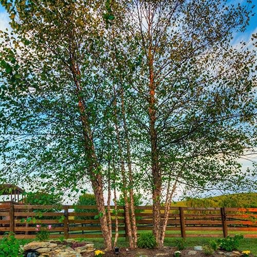 Columbia-Tree-Services
