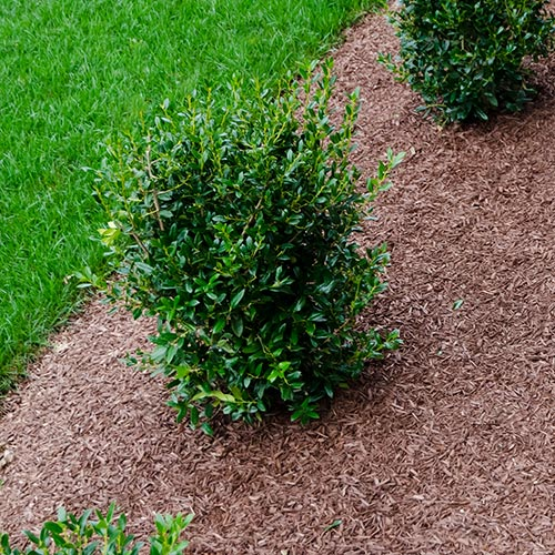Mulching-Services